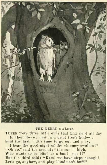 newell_merry_owlets