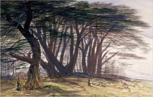 Edward Lear, The Cedars of Lebanon