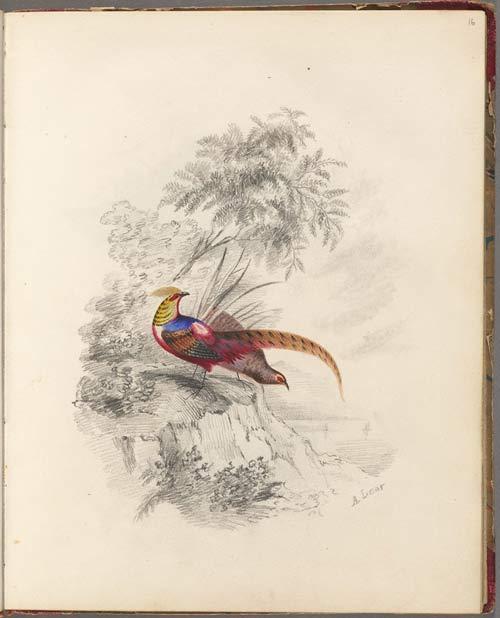 0_anns-bird-s
