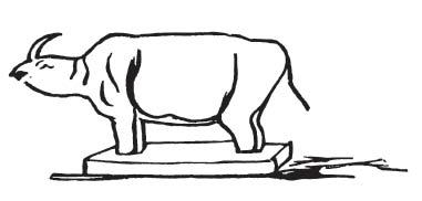 lear-rhino