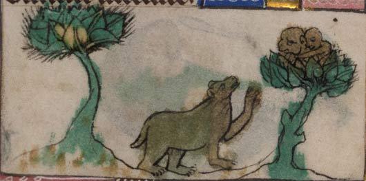 bear-apes-3