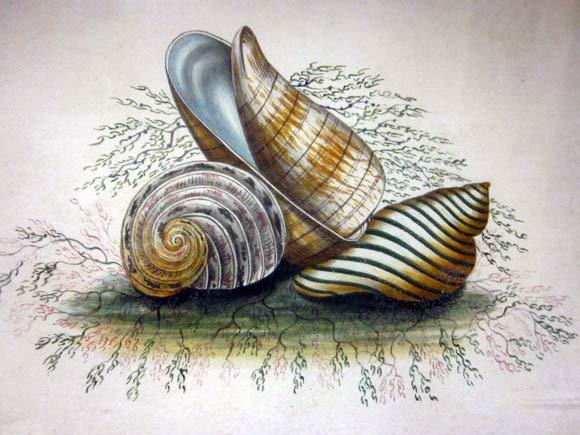 el_shell1-s