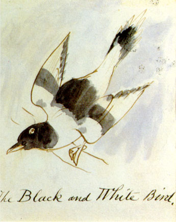 blackwhitebird